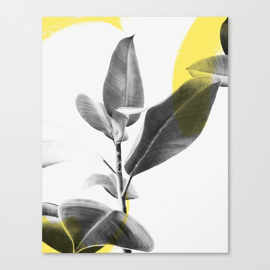 EXOTIC Canvas Print