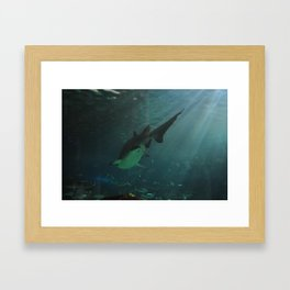 Shark 2 Framed Art Print