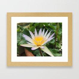 Flower V Framed Art Print