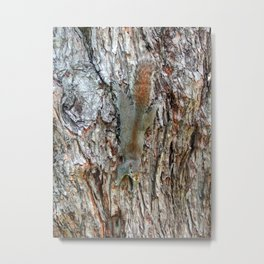 Find The Squirrel Metal Print