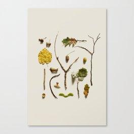 COMPOSIZIONE FOGLIE V Canvas Print