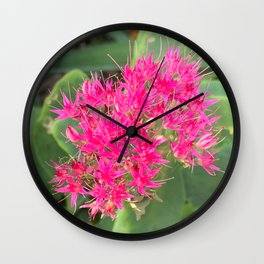 Hot Pink Flower - Garden Stonecrop Floral Photography Art Wall Clock