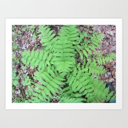 Fern From Above Art Print