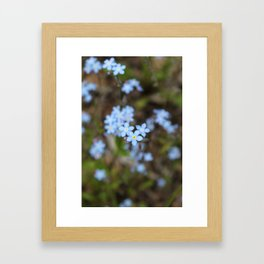 3 Forget-Me-Nots in the Center Framed Art Print