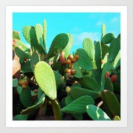 Cactus fruit turquoise Art Print