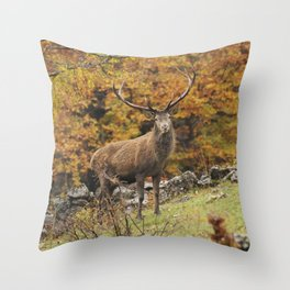 Cervo Maschio Throw Pillow