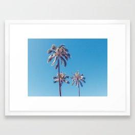 palm tree ver.sunny day Framed Art Print