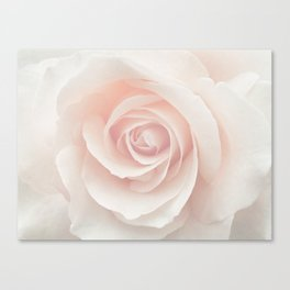 Blush Pink Rose Canvas Print