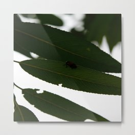Unexpected visitor Metal Print