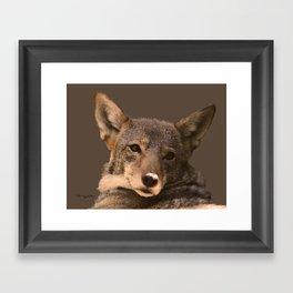 Coyote Gray Framed Art Print