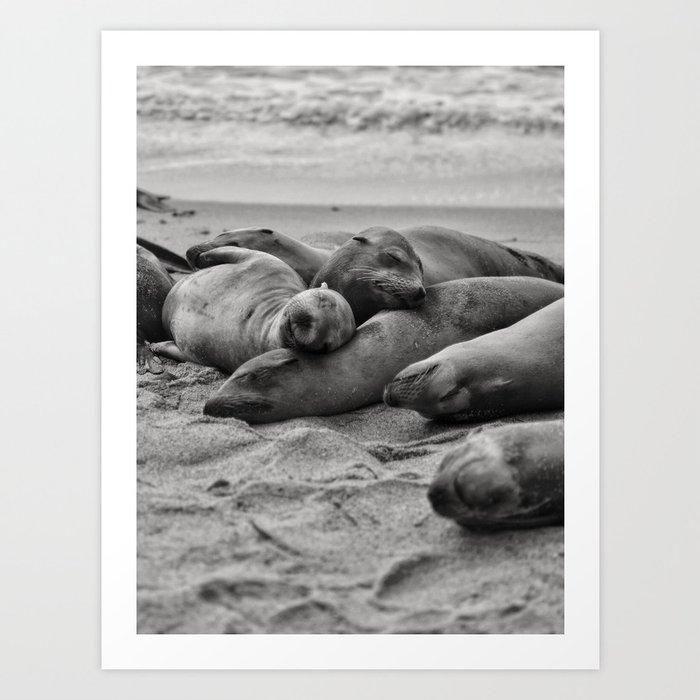 Sleeping Sea Lions Art Print