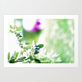 Blueberry Delight Art Print