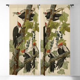 111 Pileated Woodpecker Blackout Curtain