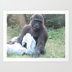 Gorilla With Blanket Art Print