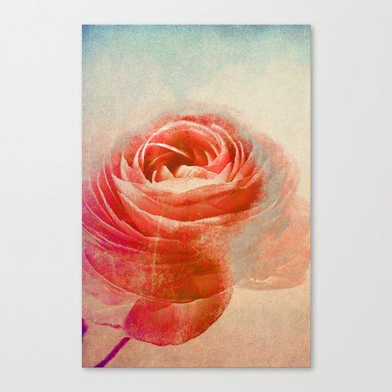 Vintage Ranunculus(3). Canvas Print