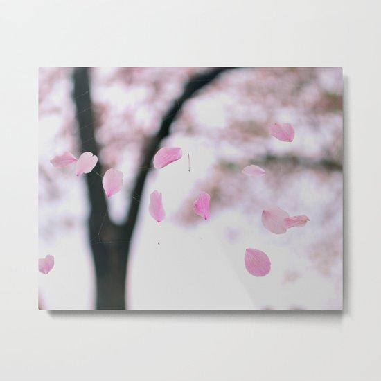 """Cherry Blossom Petals ~ """"Web of Pink Petals"""" Metal Print"""