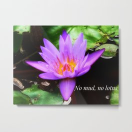 No Mud, No Lotus by Mandy Ramsey Metal Print