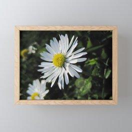 Little daisy downunder Framed Mini Art Print