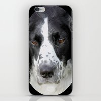 border collie iPhone & iPod Skins featuring Border Collie by Doug McRae