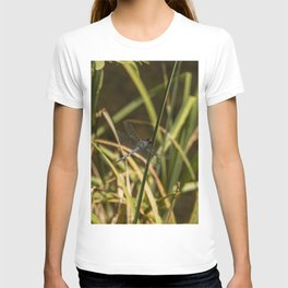 Dragonfly in the marsh T-shirt
