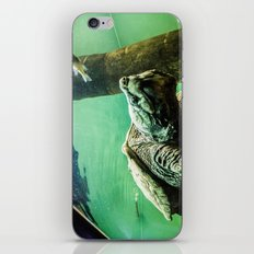 An Alligator Snapping Turtle  iPhone & iPod Skin