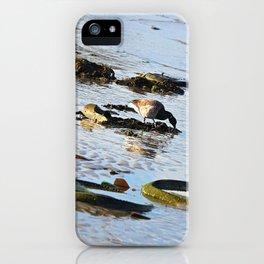 Trash Bird, #6 iPhone Case