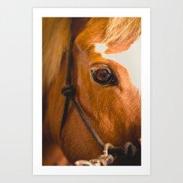 the horse's eye. Art Print