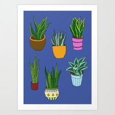 mother in laws tongue Art Print