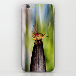 Precariously Perched iPhone Skin
