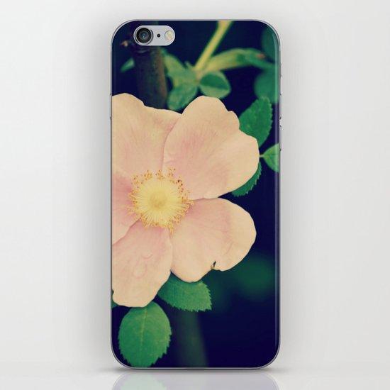 Perfectly Pretty iPhone & iPod Skin