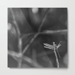 Dragon Fly in Black and White Metal Print