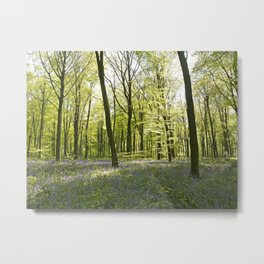 Springtime at Itchen Wood Metal Print