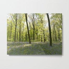 Springtime at Itchen Wood Metal Print