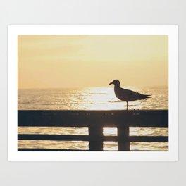 Seagull at Sunset Art Print