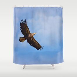 Young Bald Eagle in Flight Shower Curtain