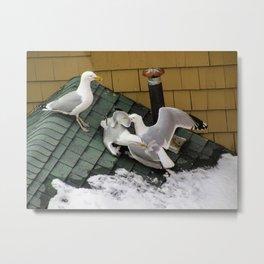 Brawling Gulls (3) Metal Print