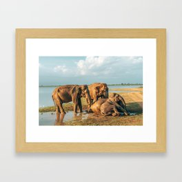 Elephant Sunset Framed Art Print