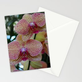 Peabody Orchid II Stationery Cards