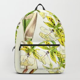A orchid plant - Vintage illustration Backpack