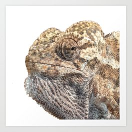 Chameleon With Sinister Facial Expression Isolated Art Print