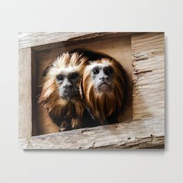 Two Monkeys Wildlife Photograph Metal Print