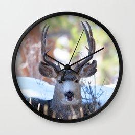 Watercolor Deer, Mule 13, RMNP, Colorado, Buuuuurp Wall Clock