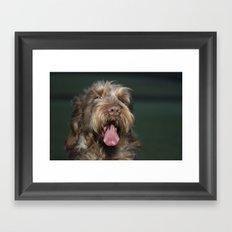 Brown Roan Italian Spinone Dog Head Shot Framed Art Print