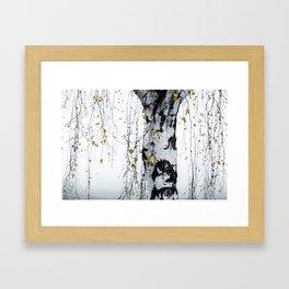 Birch Tree 1 Framed Art Print
