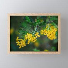 Yellow Blossoms 3 Framed Mini Art Print