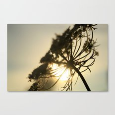 Lace Silhouette Canvas Print