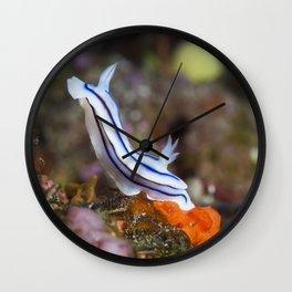 Loch's Chromodoris in Bunny Pose Wall Clock
