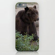 Grizzly Bear iPhone 6s Slim Case