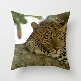 Awesome Spectacular Creature Dozing On Branch In Shadow Zoom UHD Throw Pillow