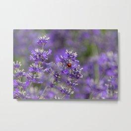 Ladybird on Lavender. Metal Print